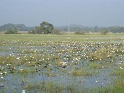 Lac Iris d`eau