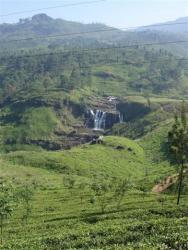 Nuw. Eliya - plantation de thé et cascade