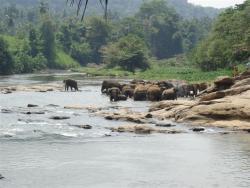Pinawella - baignade dans la rivière