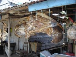 Echoppe de poissons séchés